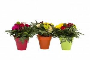 bouquets 6wmk