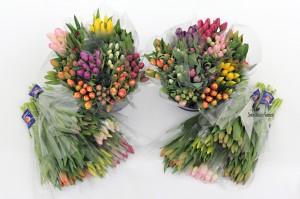 cut tulips 003wmk
